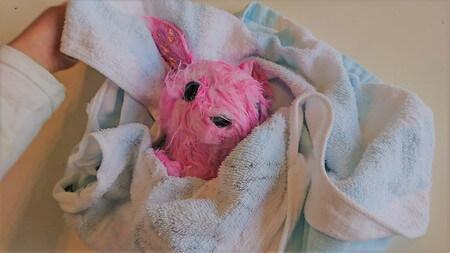 フーアーユーを洗い終わったらバスタオルに包む