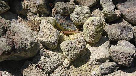 サルファー・バンクス 硫黄の結晶