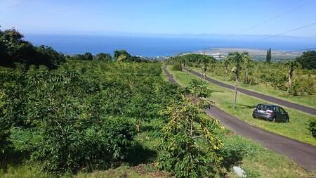 ハワイUCCコーヒー農園からの景色