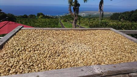 干しているコーヒー豆