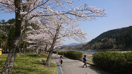 宮リバー 桜のトンネル