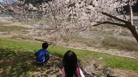 宮リバー 桜と川