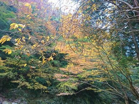 赤目四十八滝渓谷の紅葉